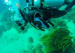 Scuba Diving, Tayrona National Park