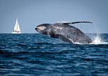 Humpback whales Watching Punta Cana