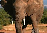 5-Day Small Group Garden Route Tour from Cape Town including Addo National Park