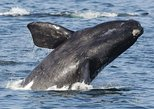 2-Day Wine and Whale Coast Small Group Tour with Cape Agulhas from Cape Town