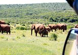8-Day Garden Route, Cape Point, Winelands Small Group Tour from Cape Town Combo