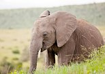 2-Day Western Cape Big 5 Safari and Route 62 from Cape Town