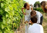 2 wine regions within a day : Saint-Emilion and Medoc