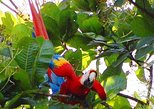 Private Puntarenas Shore Excursion: Hiking in Carara National Park