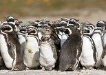 Pingüinos de Punta Tombo: tour privado con recogida en Puerto Madryn. Puerto Madryn, ARGENTINA