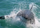 Shark Cage Diving and Viewing from Cape Town