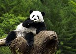 Asia - China: Beijing Zoo Panda House and Summer Palace Private Tour by Subway
