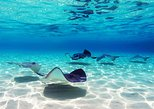 Punta Cana Shark & Rays Encounter, Snorkel, Natural Pool by Glass Bottom Boat