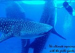 Whale Shark Swimming Experience and Aguinid Falls from Cebu
