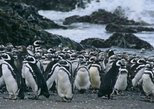 Private Tour to Chiloé Island: Penguins of Puñihuil- Castro and Ancud