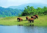 Kerala Hills, Backwaters & Wildlife 5 days (Private)