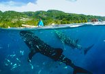 Canyoneering with Whale Shark Encounter