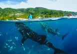 Canyoneering with Whaleshark Viewing- SHARED TOUR