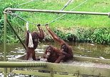 Orangutan & Charcoal Factory Tour