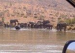 Pilanesberg National Park Day Tour from Pretoria