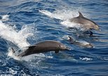 Puerto Princesa Dolphin Watching Tour