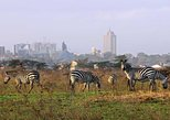 1Day Nairobi National Park,Elephant Orphanage,Giraffe Center& Karen Blixen Tour