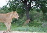 Full-Day Big 5 Safari from Hazyview