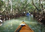 Mangrove Tunnel Kayak Ecotour