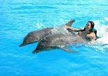 Enjoy one day all incluisive Garrafón Park and a complete Swim Dolphin Program
