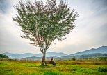 Feeling of Spring & Summer in Yangpyeong & Jeju Island