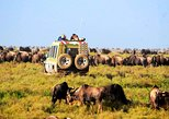 6-Day Tanzania Camping Safari: Lake Manyara, Serengeti, Ngorongoro Cater and Tarangire National Park from Arusha