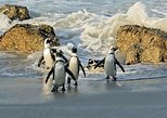 Cape Town to Cape Point Private Day Tour