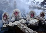Nagano Day Trip from Tokyo: Snow Monkeys, Hot Springs and Zenko-ji Temple