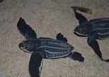 Matura Beach Turtle-Watching Experience