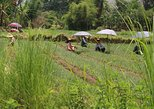 Farming around Inle Lake (Half day Guided private tour)