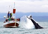 Traditional Whale Watching Tour from Húsavík