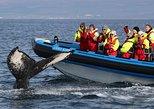 Big Whale Safari and Puffins RIB Boat Tour from Húsavík