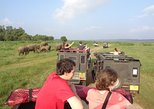 Minneriya Park Elephant Gathering Private Jeep Safari from SIGIRIYA