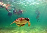 Swimming in an area known for Turtles and Cenotes Tour