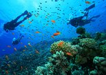 Diving In Belle Mare Mauritius
