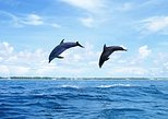 Full-Day Swimming with Dolphins and Casela Nature Park Tour in Mauritius