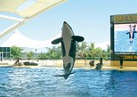 Loro Park and Siam Park Twin Ticket with Transfer to Loro Park