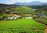 Dalat Countryside with Elephant Waterfall, Paradise Lake, and More