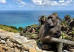 Cape Point, Penguins and Wine Tasting Guided Day Tour from Cape Town