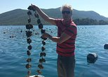 3-4h STON, OYSTERS and WINE TOUR FROM DUBROVNIK