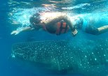 Exciting Swim with Whale Sharks Tour