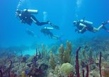1-Hour Certified Dive in Punta Cana