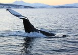 From Tromso all-inclusive Whale and Seabird Safari by Boat to Skervøy