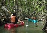 Damas Island Mangrove Kayaking Tour from Jacó