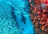 Snorkeling Adventure at Espiritu Santo Island National Park