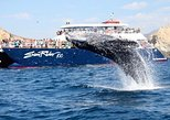 Whale-Watching Brunch Cruise in Los Cabos