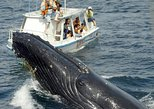 Bay of Samana Whale Watching Tour from Puerto Plata
