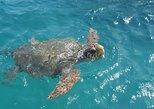 Turtle Spotting Cruise in Zakynthos