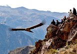 Condor Lookout Point Hike in Chonta from Cusco