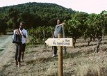 Hiking and wine tasting in Pic St Loup